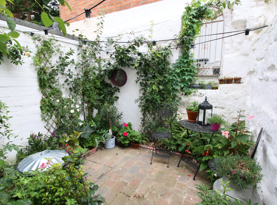 Climbing plants up white-painted courtyard walls